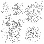 Set of graphical decorative roses, graphic roses, blossom roses, tattoo roses, summer roses, sketchy roses. contour roses, vintage roses, pattern roses, silhouette roses. Vector. poster