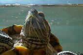 Big green ocean turtle in aquarium poster
