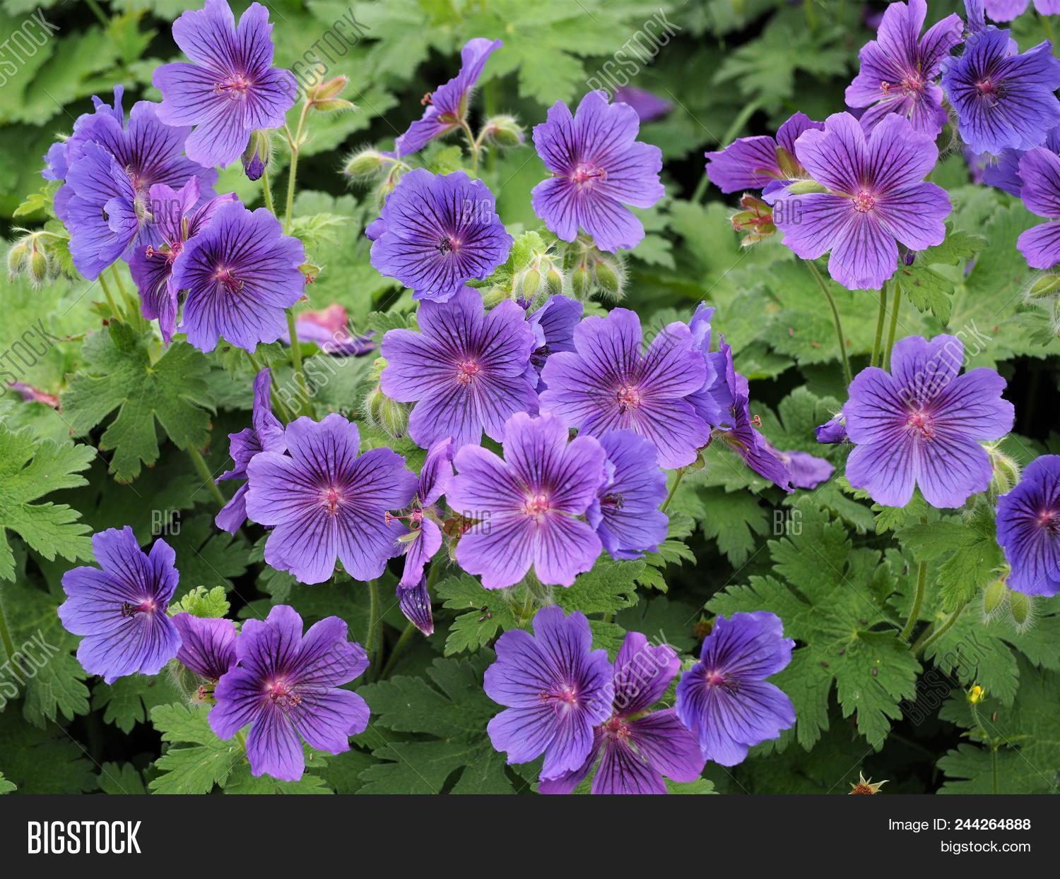 Pretty Purple Flowers Image Photo Free Trial Bigstock