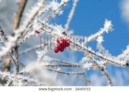 Beeren in der frost
