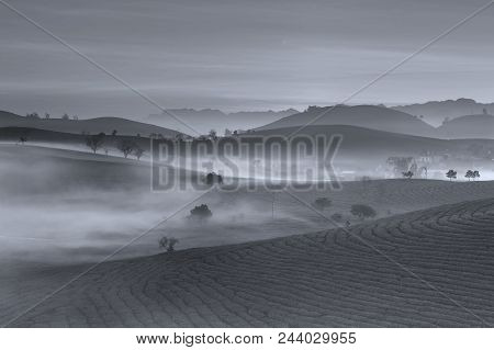 Fog In The Blue Mountains: The Smooth Slopes Of The Hills Are Riddled With Fields, Lonely Trees Are
