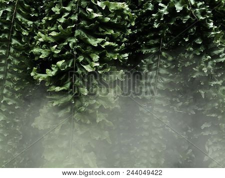 Fern Leaves And White Fog In The Dark Background, In The Dark; The Fog Feels Both Cold And Lonely.