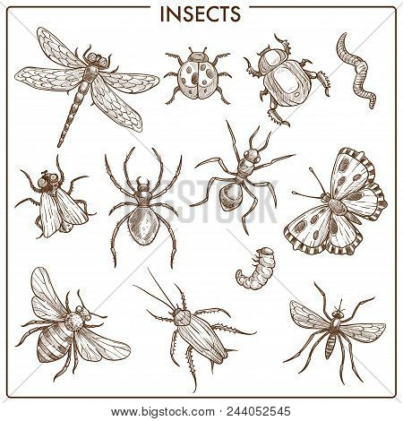 Insects That Fly And Creep Monochrome Sepia Sketches. Big Dragonfly, Beautiful Butterfly, Tiny Ant,