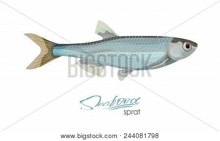 Sprat Sketch Fish Icon. Isolated Marine Atlantic Ocean Sprats. Isolated Symbol For Seafood Restauran