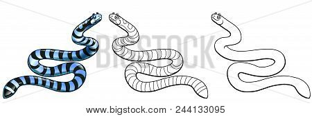 Beautiful, But Dangerous Striped Black With Gray A Sea Serpent Colorful And Line-art Separately On A
