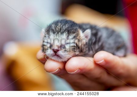 Woman holds on her hand a little defenseless kitty. Manifestation of love for animals. Reliable protection and security poster
