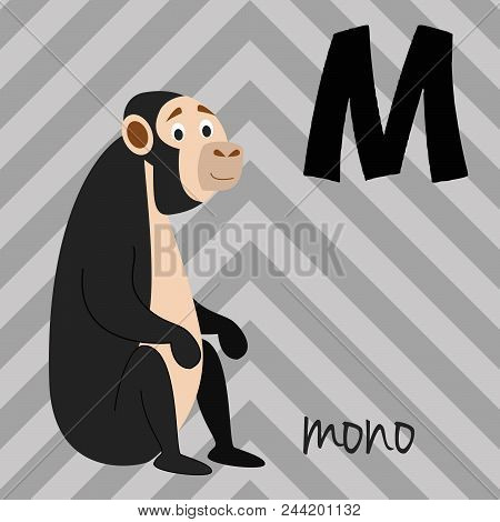 Cute Cartoon Zoo Illustrated Alphabet With Funny Animals. Spanish Alphabet: M For Mono. Learn To Rea