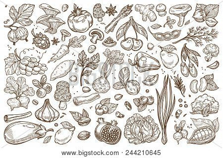 Fruit And Vegetables Monochrome Sepia Sketches Big Set. Natural Products Grown At Farm Outline Templ