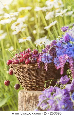 Fresh Red Cherries In Wicker Basket. Thyme, Cornflower, Blue Bells And White Flowers Blossom Bouquet
