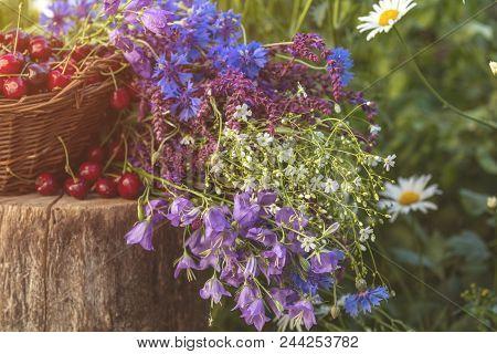 Fresh Red Cherries In Wicker Basket. Thyme, Cornflower, Blue Bells And White Flowers Blossom Bouquet