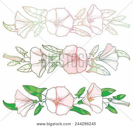 Vector Set With Outline Convolvulus Or Bindweed Flower Garland, Bell, Leaf And Bud In Pastel Pink An