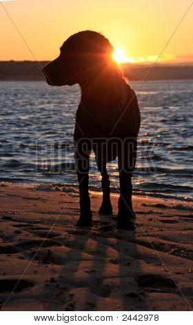 Budle Bay Sunset