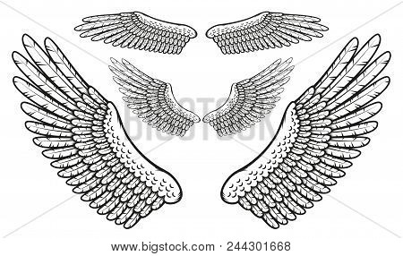 Set Of Bird Wings With Finely Drawn Feathers In The Stamp Style.