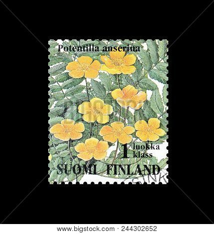 Finland - Circa 1994 : Cancelled Postage Stamp Printed By Finland, That Shows Common Silver Weed.