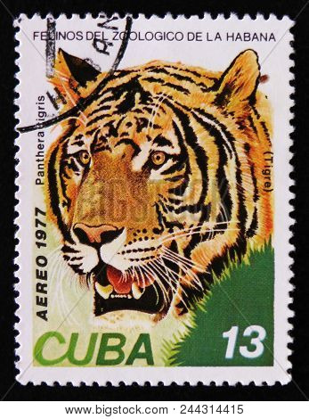 Moscow, Russia - April 2, 2017: A Post Stamp Printed In Cuba, Shows Panthera Tigris, Series, Circa 1