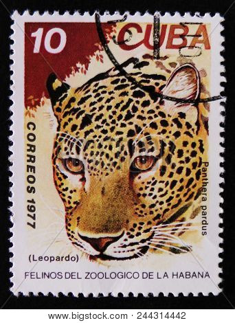 Moscow, Russia - April 2, 2017: A Post Stamp Printed In Cuba, Shows Panthera Pardus, Leopard, Series