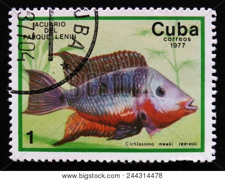 Moscow, Russia - April 2, 2017: A Post Stamp Printed In Cuba Show The Fish With The Inscription Cich