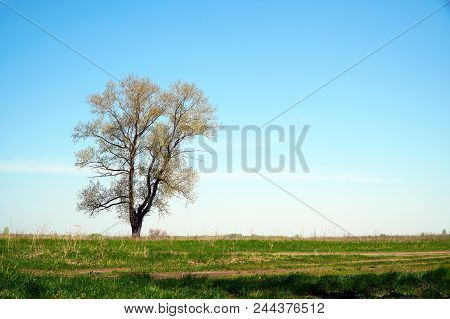 A Lonely Tree Against A Background Of Green Grass And Blue Sky