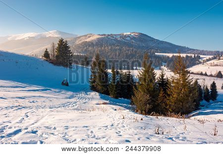Spruce Trees On Snowy Hillside. Beautiful Frosty Day. Borzhva Mountain Ridge In The Distance. Lovely