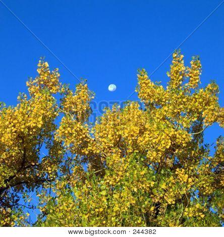 Colorful Autumn Scene
