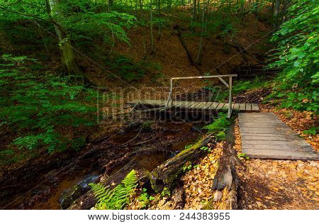 Wooden Bridge Above The Forest Stream. Lovely Nature Scenery In Summer. Beautiful Ancient Beech Fore