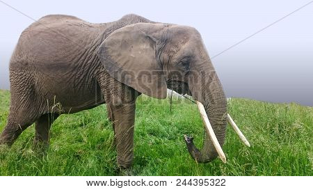 Asian Elephants Are The Largest Living Land Animals In Asia.asian Elephants Are Highly Intelligent A