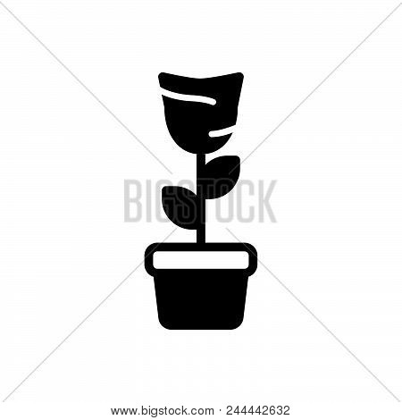 Plant In Pot Vector Icon On White Background. Plant In Pot Modern Icon For Graphic And Web Design. P
