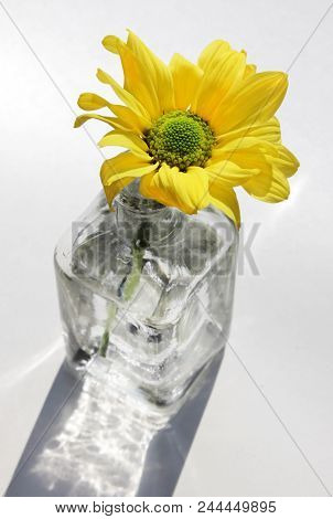 Still Life With Beautiful Yellow Daisy Flower In The Small Vintage Glass Botlle Against A High Key B