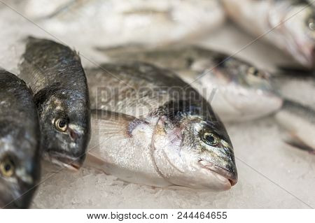 Fresh Chilled Sea Fish On Ice. Fresh Fish From The Sea To The Market Displayed On A Thick Bed Of Fre