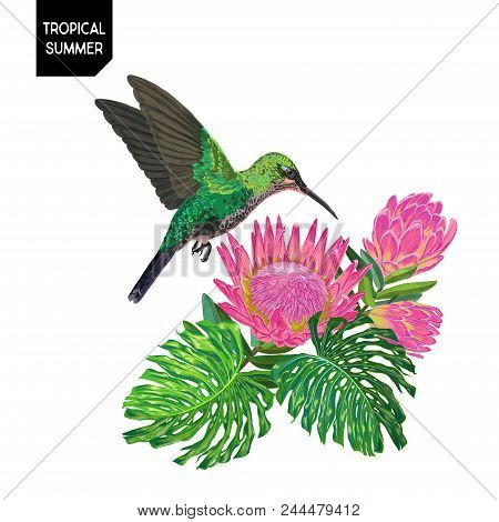 Summer Tropical Design With Hummingbird And Exotic Flowers. Floral Background With Tropic Bird, Prot