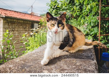Portrait Of The Interested, Striped Brown Cat In Outdoors.