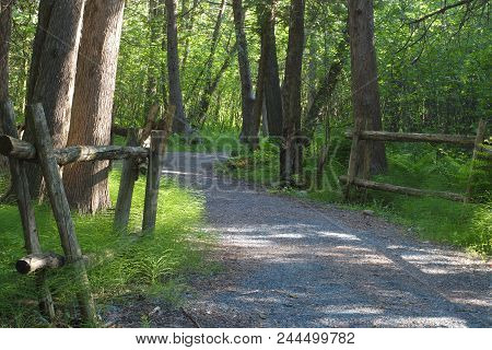 Wood Forest Nature Environment Woodland Scenic Landscape