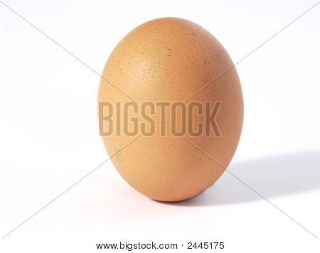 Braun Egg