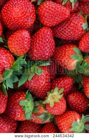 Bunch Of Ripe Freshly Picked Organic Strawberries With Green Leaves At Farmers Market. Vibrant Vivid