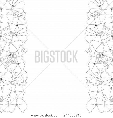 Alcea Rosea Outline Border - Hollyhocks, Aoi In The Mallow Family Malvaceae. Isolated On White Backg