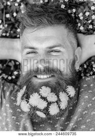 Guy With Dandelions In Beard Relaxing, Top View. Breeziness Concept. Man With Beard On Smiling Face