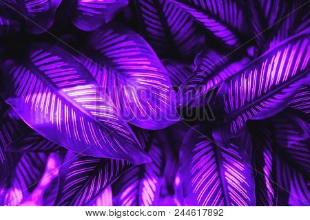Tropical Leaves In Ultra Violet Color. Concept Of Summer In Color Of The Year.