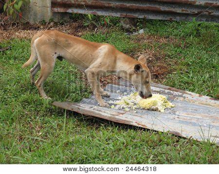 Skinny Dog Eating