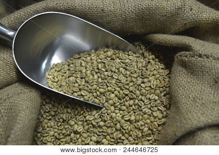 Fresh Coffee Beans