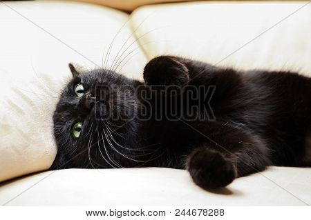 Black Cat With Green Eyes On White Sofa Background. The Concept Of A Comfortable Home, Relaxing And