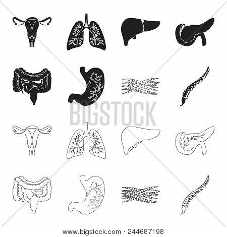Intestines, Stomach, Muscles, Spine. Organs Set Collection Icons In Black, Outline Style Vector Symb