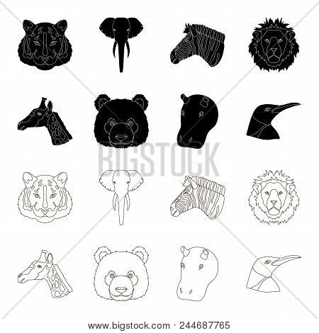 Panda, Giraffe, Hippopotamus, Penguin, Realistic Animals Set Collection Icons In Black, Outline Styl
