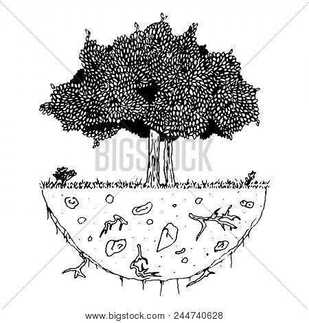 Vector Image Of A Tree With Roots On A Piece Of Land, Clean Environment Concept.  Tree With Foliage.
