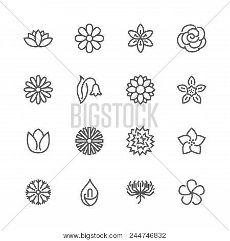 Flowers Flat Line Icons. Beautiful Garden Plants - Chamomile, Sunflower, Rose Flower, Lotus, Carnati