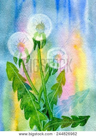Three Fluffy Dandelions On An Abstract Background. Hand-painted Watercolor Illustration And Paper Te