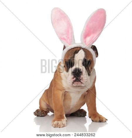 funny english bulldog with pink rabbit ears and eyes closed sitting on white background