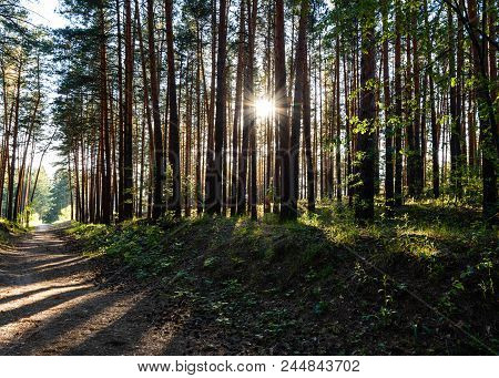 forest, tree, nature, pine, trees, landscape, woods, wood, road, green, path, summer, park, autumn,