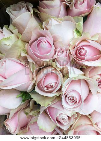 Close up bouquet rose