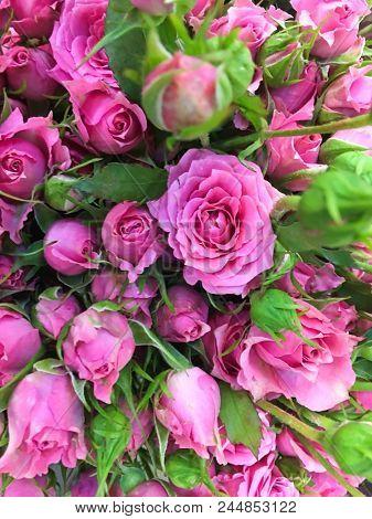bouquet rose for sale in flower shop