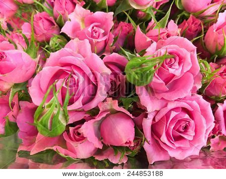 Close up pink bouquet rose in shop
